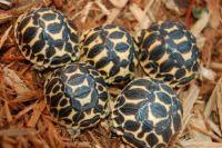 Tortoise Reptiles for sale in El Paso, TX, USA. price: NA