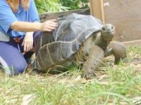 Tortoise Reptiles for sale in Columbus, OH, USA. price: NA