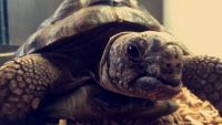 Tortoise Reptiles for sale in State Hwy 161, Texas, USA. price: NA