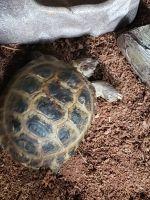 Tortoise Reptiles for sale in Aurora, CO, USA. price: NA