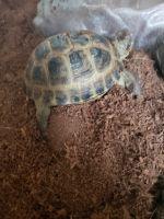 Tortoise Reptiles Photos