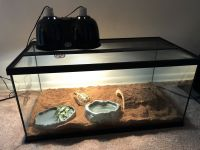 Tortoise Reptiles for sale in Bryn Mawr, PA, USA. price: NA