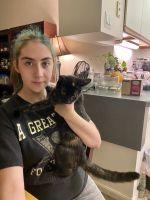 Tortoiseshell Cats for sale in 1112 Cherrington Dr, Harrisburg, PA 17110, USA. price: NA