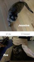 Tortoiseshell Cats for sale in Heber City, UT 84032, USA. price: NA