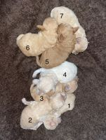 Toy Poodle Puppies for sale in New York, NY 10025, USA. price: NA