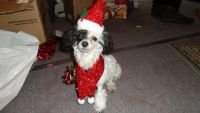 Toy Poodle Puppies for sale in Silverhill, AL 36576, USA. price: NA