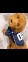 Toy Poodle Puppies for sale in Philadelphia, PA, USA. price: NA