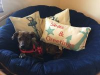 Treeing Tennessee Brindle Puppies for sale in Alexandria, MN 56308, USA. price: NA