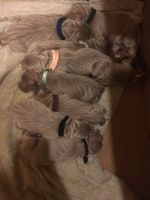 Weimaraner Puppies for sale in Bellefontaine, OH 43311, USA. price: NA