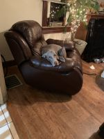 Weimaraner Puppies for sale in Lititz, PA 17543, USA. price: NA