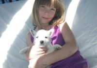 West Highland White Terrier Puppies for sale in Pittsburgh, PA 15252, USA. price: NA