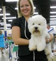 West Highland White Terrier Puppies for sale in Stewarts Point, CA 95480, USA. price: NA