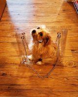 YorkiePoo Puppies for sale in Bridgeport, CT, USA. price: NA