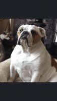 YorkiePoo Puppies for sale in Winona, MN 55987, USA. price: NA