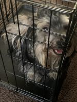 YorkiePoo Puppies for sale in Laurel, MD, USA. price: NA