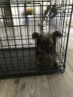 YorkiePoo Puppies for sale in Morrow, GA 30260, USA. price: NA