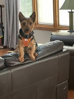 Yorkshire Terrier Puppies for sale in Bethany, IL 61914, USA. price: NA