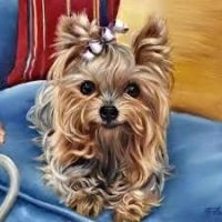 Yorkshire Terrier Puppies for sale in Los Angeles, CA, USA. price: NA