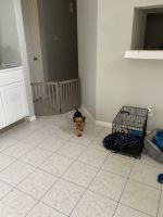 Yorkshire Terrier Puppies for sale in Katy, TX, USA. price: NA