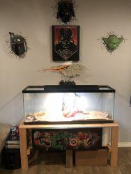2 Adult Male & Female Bearded Dragons w/tank