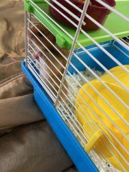 loving, adorable hamster for sale