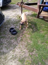 4 mouth old dog for sale