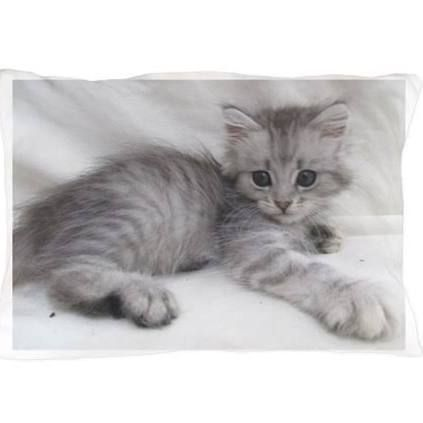 Aegean Cats for sale in U CA-99, Biggs, CA 95917, USA. price 200USD