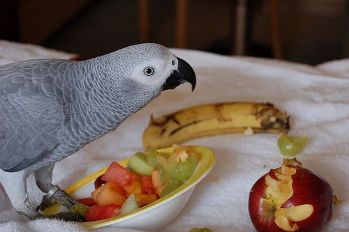 African Grey Birds for sale in Woodward Ave, Royal Oak, MI, USA. price -USD