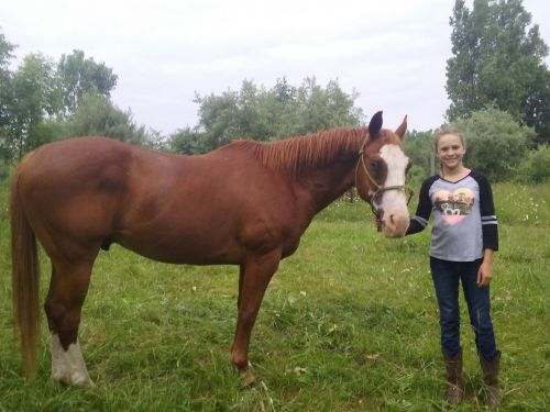 American Paint Horse Horses for sale in Owosso, MI 48867, USA. price 1250USD
