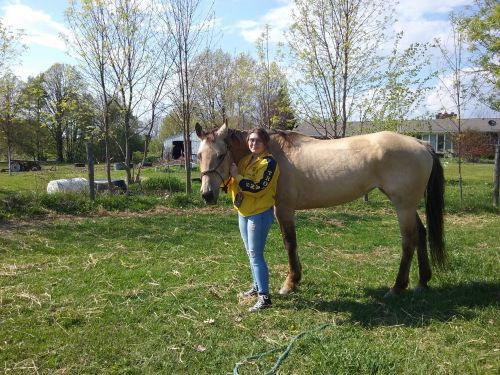 American Quarter Horse Horses for sale in Owosso, MI 48867, USA. price 1750USD