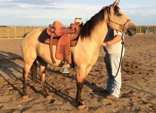 American Quarter Horse Horses for sale in Tornillo, TX 79853, USA. price -USD