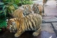 Bengal Cats for sale in Rhode Island Ave NW, Washington, DC, USA. price 800USD