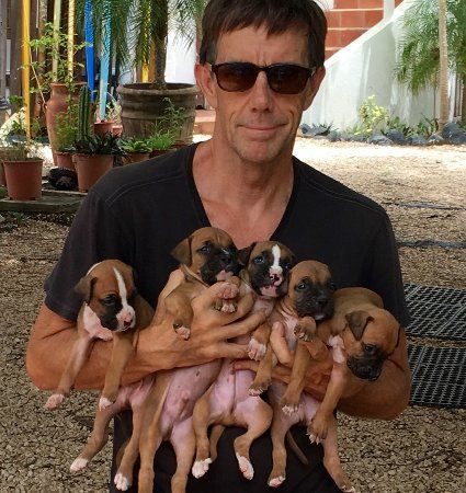 Boxer Puppies for sale in Colorado Springs, CO, USA. price 500USD