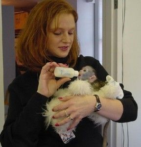 Capuchins Monkey Animals for sale in Maryland City, MD, USA. price -USD