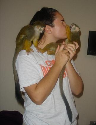 Capuchins Monkey Animals for sale in Arizona Mills, Tempe, AZ 85282, USA. price -USD