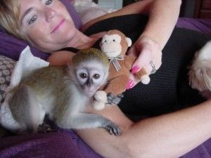 Capuchins Monkey Animals for sale in Clifton, NJ, USA. price 200USD