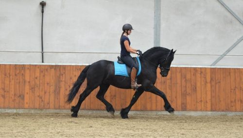 Friesian Horse Horses for sale in Rescue, CA 95672, USA. price -USD