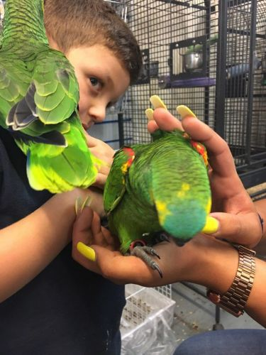 Macaw Birds for sale in Charlotte, NC, USA. price -USD
