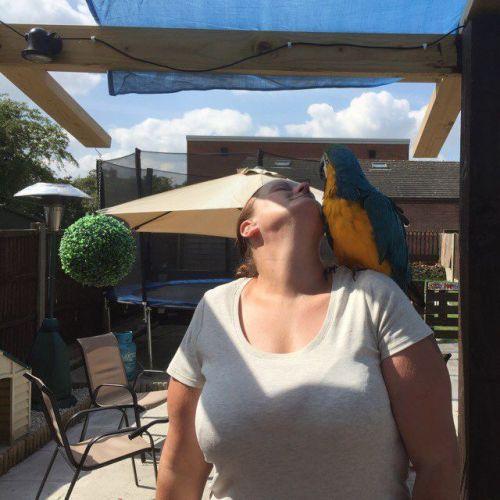 Macaw Birds for sale in Arizona Mills, Tempe, AZ 85282, USA. price -USD