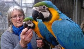 Macaw Birds for sale in Baltimore, MD, USA. price 600USD