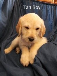 Mixed Puppies for sale in Charlotte, MI 48813, USA. price 300USD