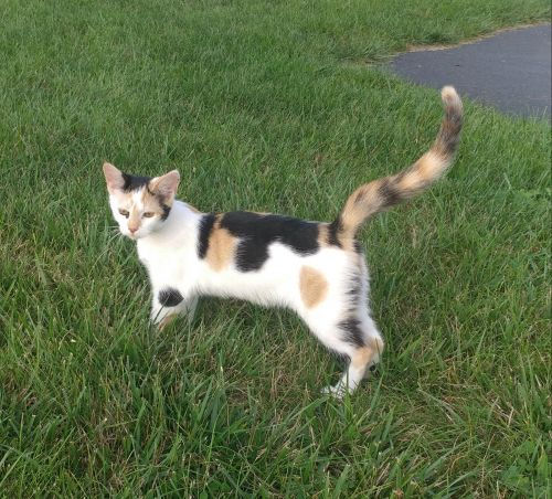 Mixed Cats for sale in Pine Grove, PA 17963, USA. price 60USD