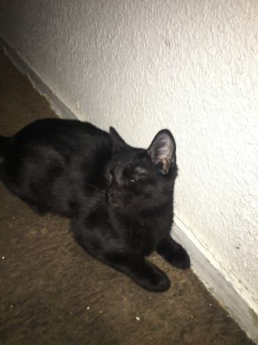 Other Cats for sale in N Airport Way, Stockton, CA 95205, USA. price 60USD