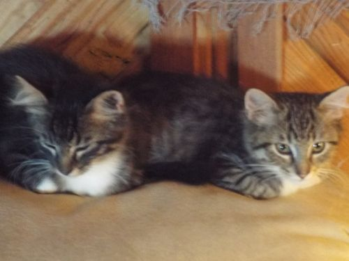 Other Cats for sale in SD-79, Vale, SD 57788, USA. price -USD