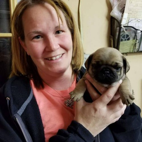 Pug Puppies for sale in Las Vegas, NV, USA. price 500USD