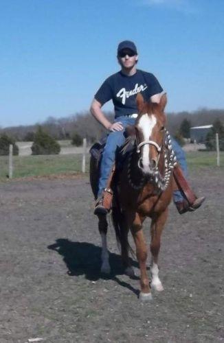Quarter Horse Horses for sale in Dallas, TX, USA. price 950USD