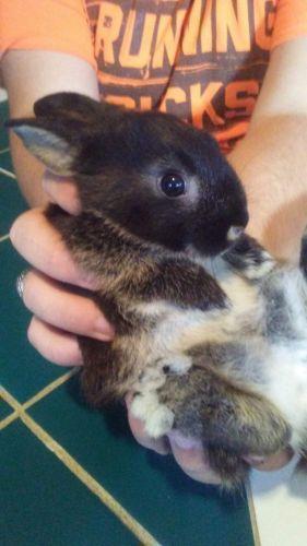 Rabbit Rabbits for sale in Willis, TX, USA. price 5USD