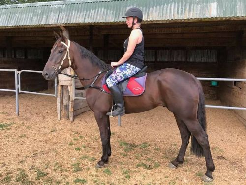 Standardbred Horse Horses for sale in Dallas, TX, USA. price -USD