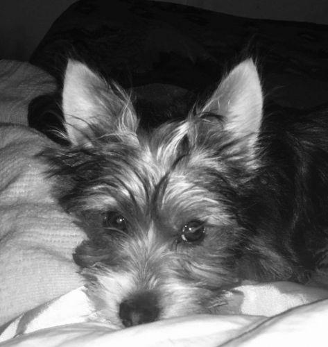 Puppies Sale Denver County Hooblyus