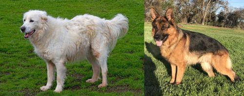 Abruzzenhund vs German Shepherd